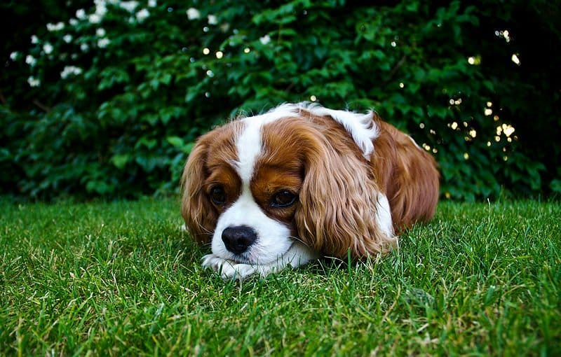 800px-Dog_In_The_Grass