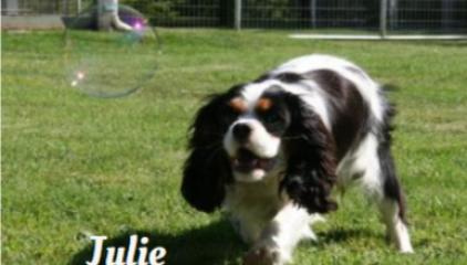 """""""Julie"""""""