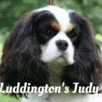 """CH Luddington's Judy Bug"""