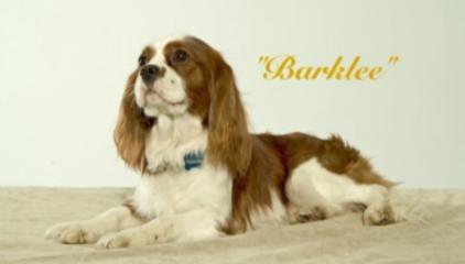 """Barklee"""