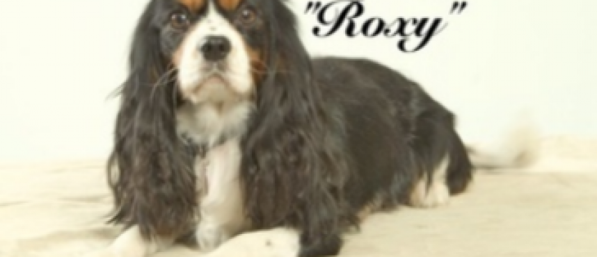 """Roxy"""