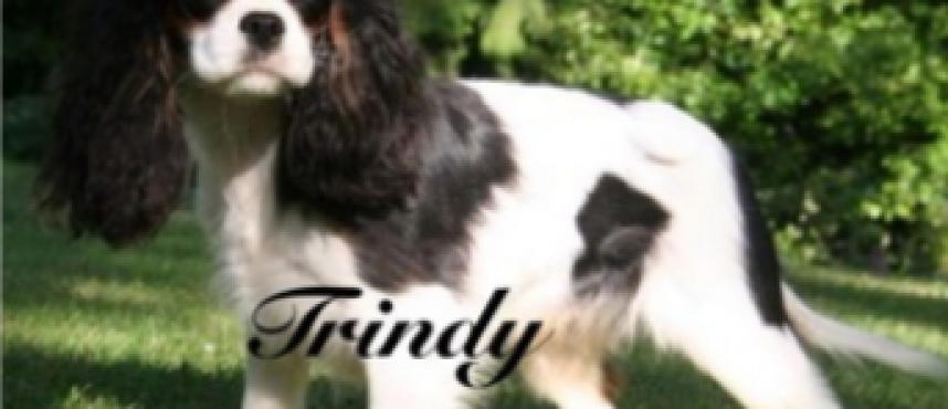 """Trindy"""