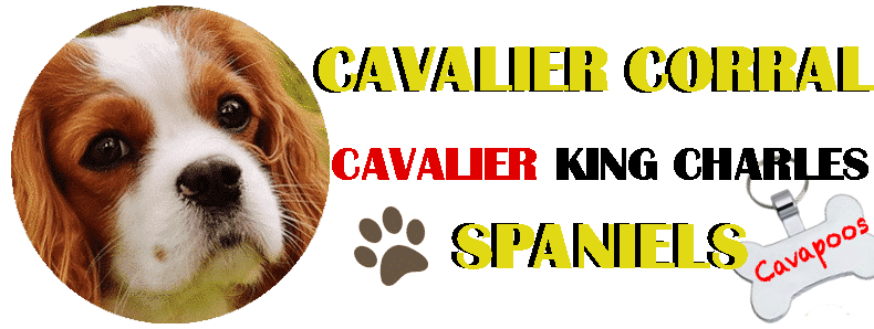 Cavalier Corral-King Charles Spaniels